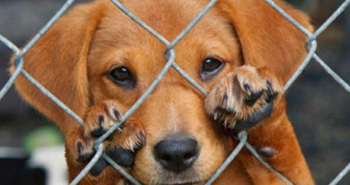 Gral. Roca: Fiscalía investiga hecho de crueldad animal y convoca a testigos