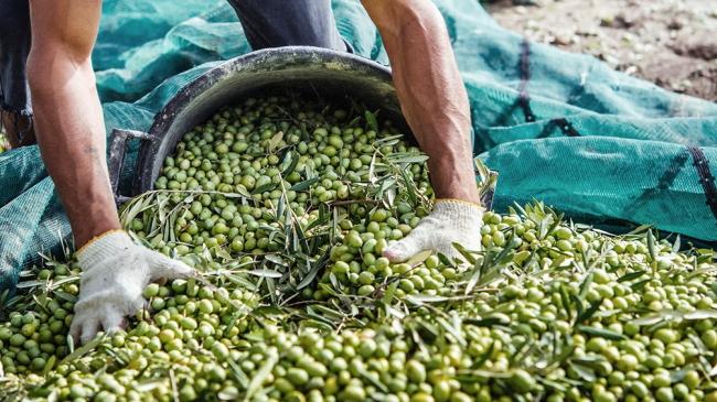 Preocupa que no lleguen trabajadores «golondrinas» para las diferentes cosechas