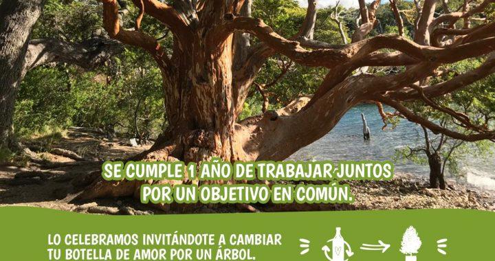 """Bariloche Sustentable: invitan a cambiar una """"botella de amor"""" por un árbol"""