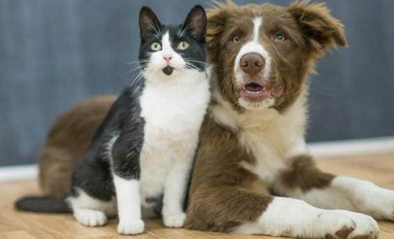 Sumate a la Campaña de Vacunación Antirrábica gratuita para perros y gatos