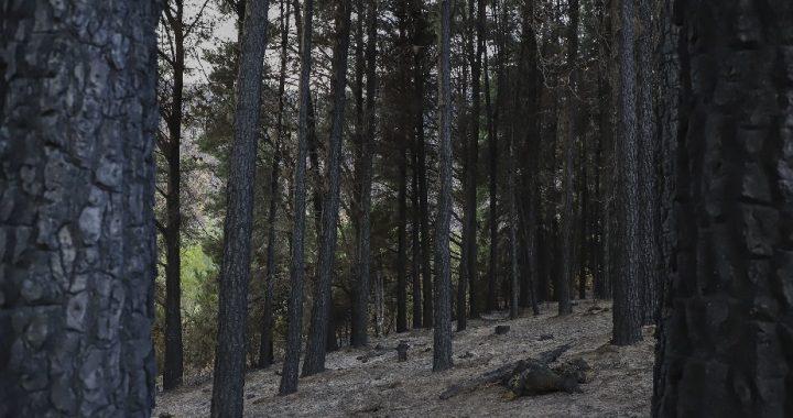 Declaran estado de Emergencia y Desastre Agropecuario y Forestal para el Departamento de Bariloche