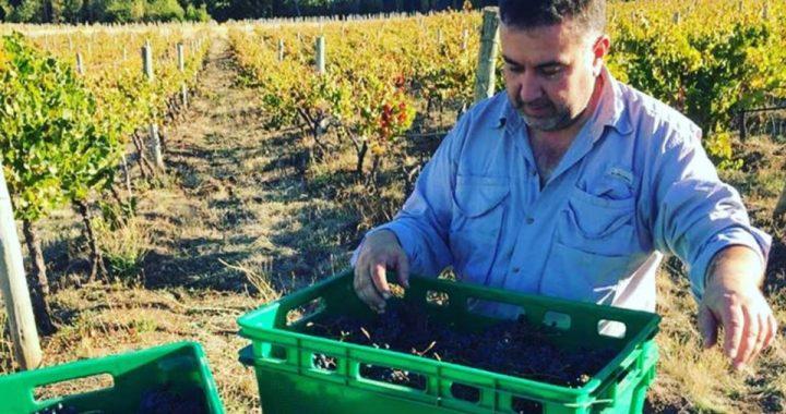 Un enólogo de El Hoyo hablará del potencial de la vitivinicultura local