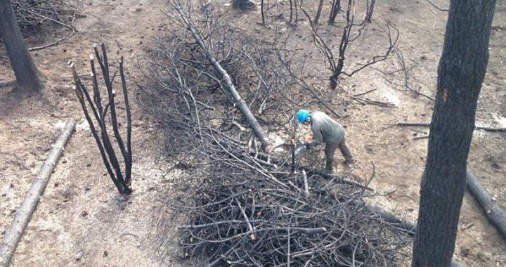 Reconstruirse después del incendio