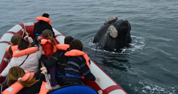 El golfo San Matías se prepara para vivir a pleno una nueva temporada de avistaje de fauna marina