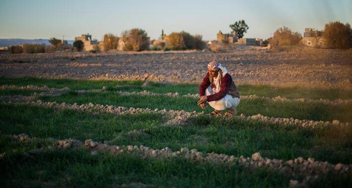 Aumenta el auxilio a Yemen del Banco Mundial y agencias de la ONU