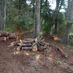 Arbol de Pie a favor de mas inspectores de bosques